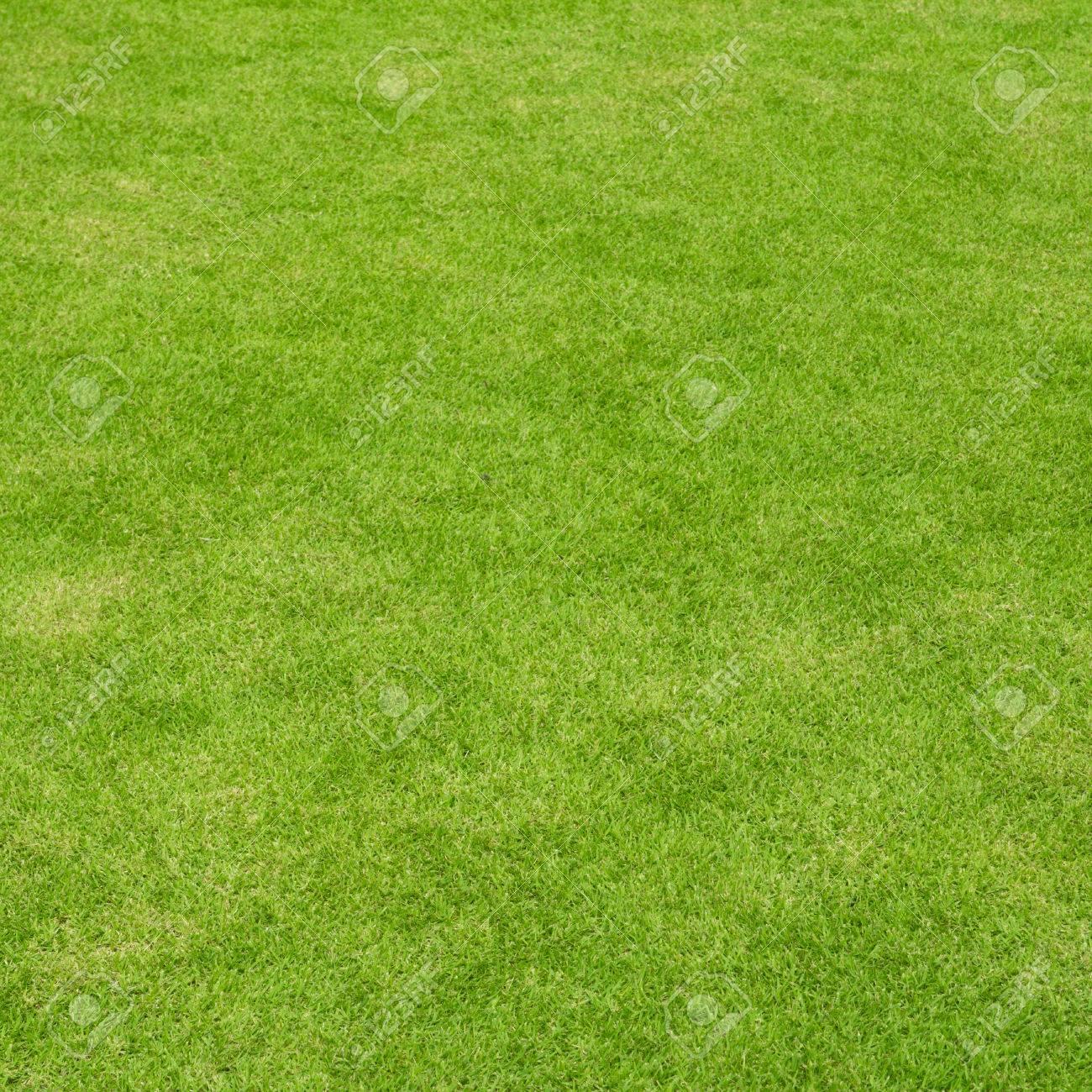 Hintergrund Schönen Rasen Real Gras In Einem Quadratischen Rahmen