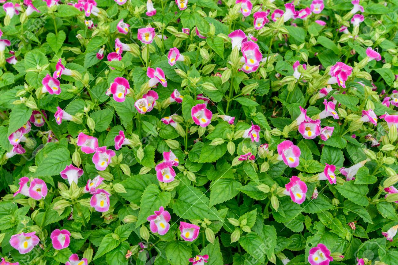 Small Pink Flowers With Green Leaves For Background Texture Stock