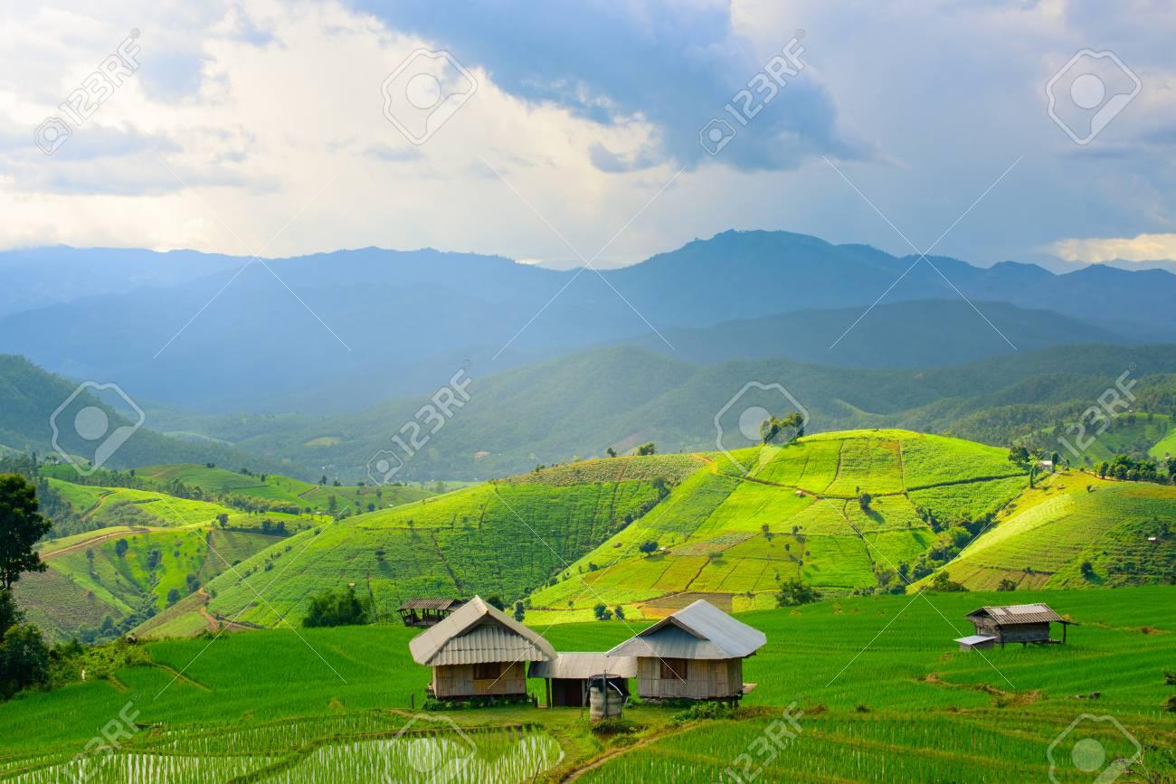 Vista De Campos De Arroz Verde Terraza De Montaña Con Cabaña En El Campo Tierra Con Plantas Cultivadas De Arroz Y Mar De Niebla En Pa Pong Piang