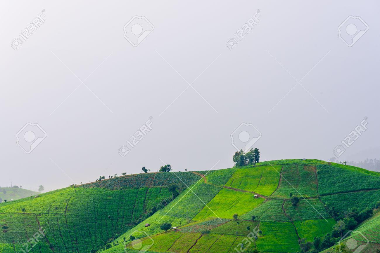 Vista De Campos De Arroz Verde Terraza Montaña En Campo Tierra Con Plantas Cultivadas De Arroz Y Mar De Niebla En Pa Pong Piang Tailandia