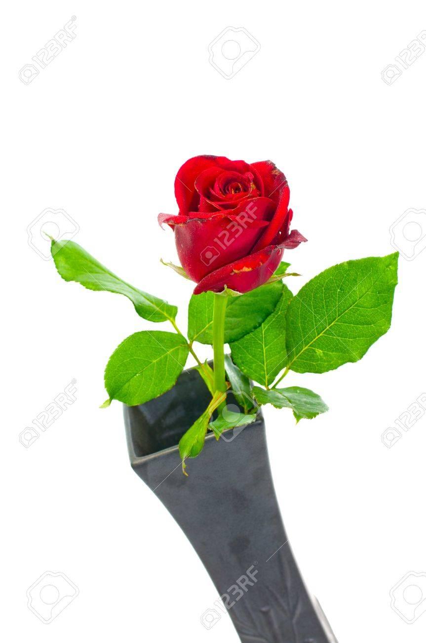 Single red rose in black vase on white background stock photo single red rose in black vase on white background stock photo 14428915 reviewsmspy