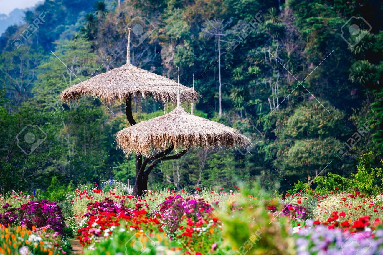 Beautiful Flowers Garden At Doi Angkhang Mountain Chiang Mai Thailand Stock Photo