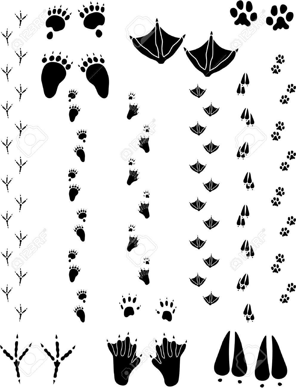 paw prints and tracks of six different animals top row left