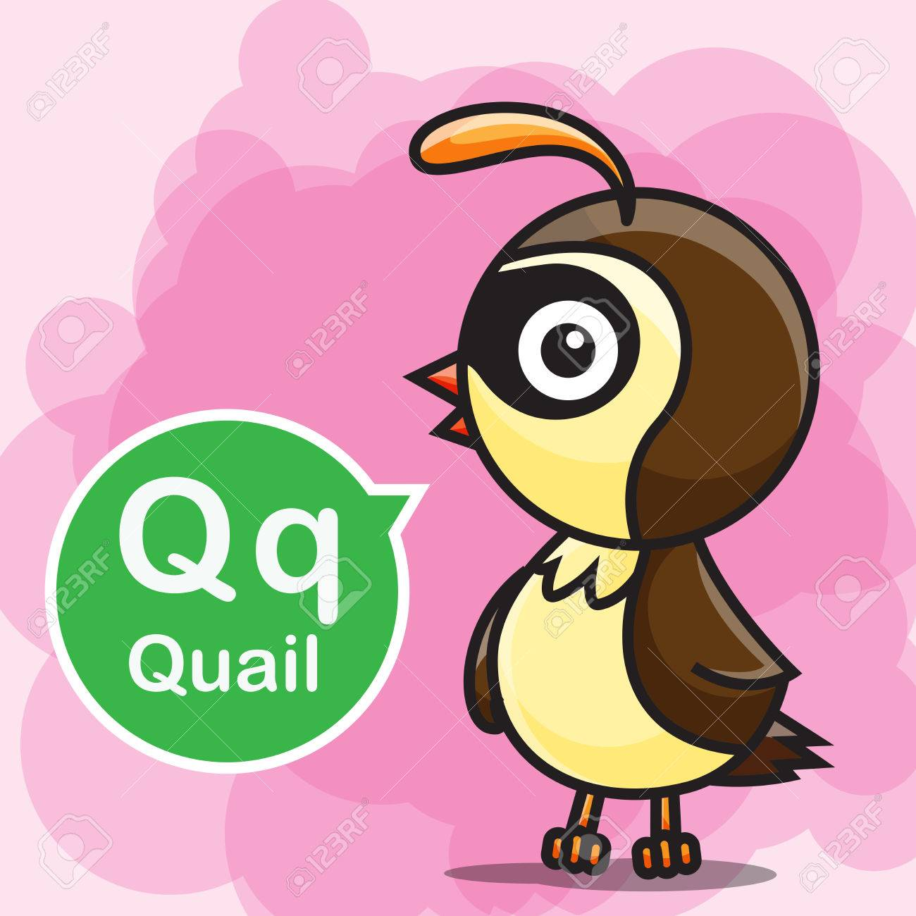 Q Quail Animal Cartoon And Alphabet For Children To Learning ...
