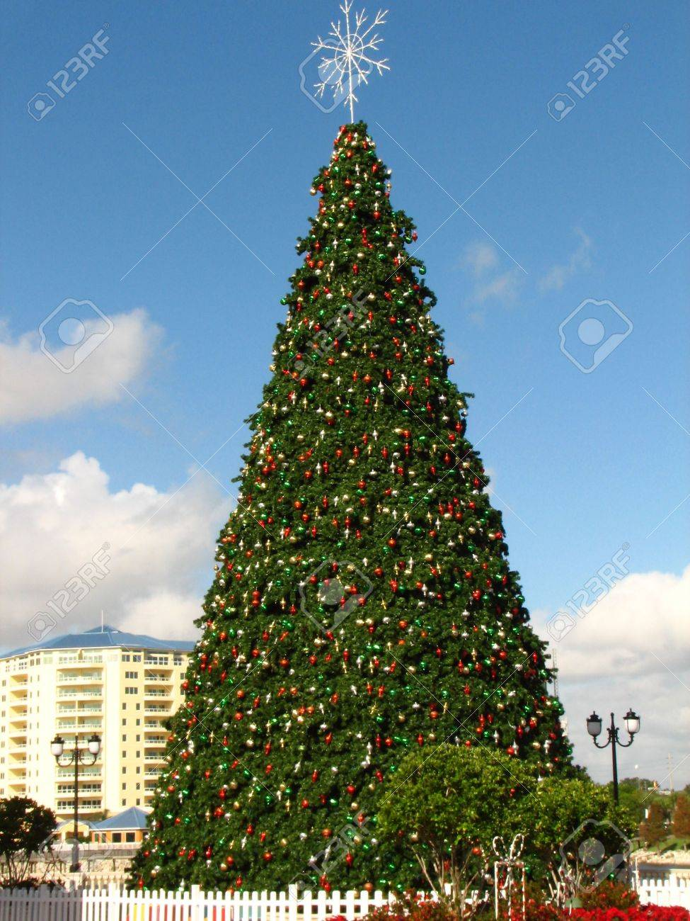 Florida christmas ornament - Shot Of A Giant Christmas Tree At Cranes Roost Park In Altamonte Springs Florida