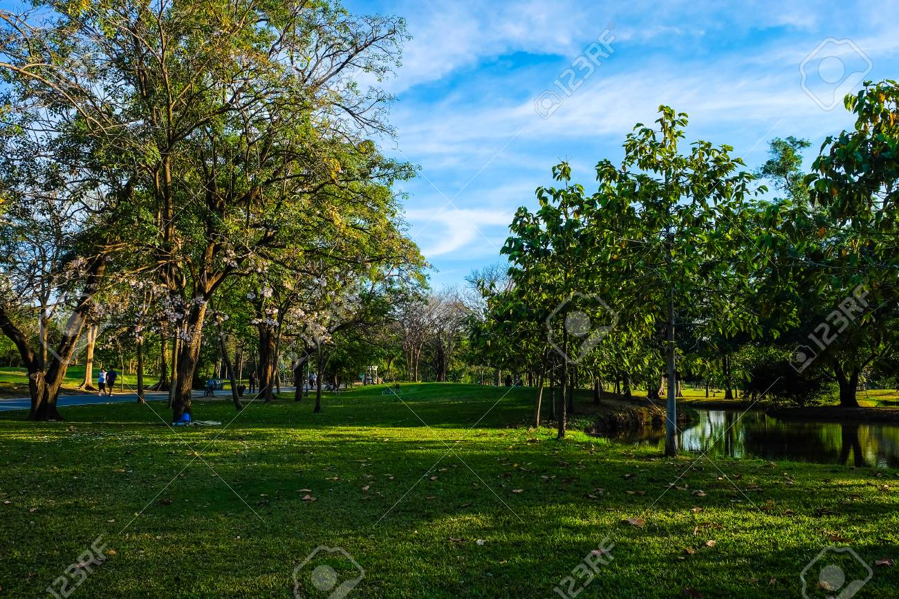 Green Meadow Field In City Park Blue Sky Nature Green Scene Stock Photo Picture And Royalty Free Image Image 78654672