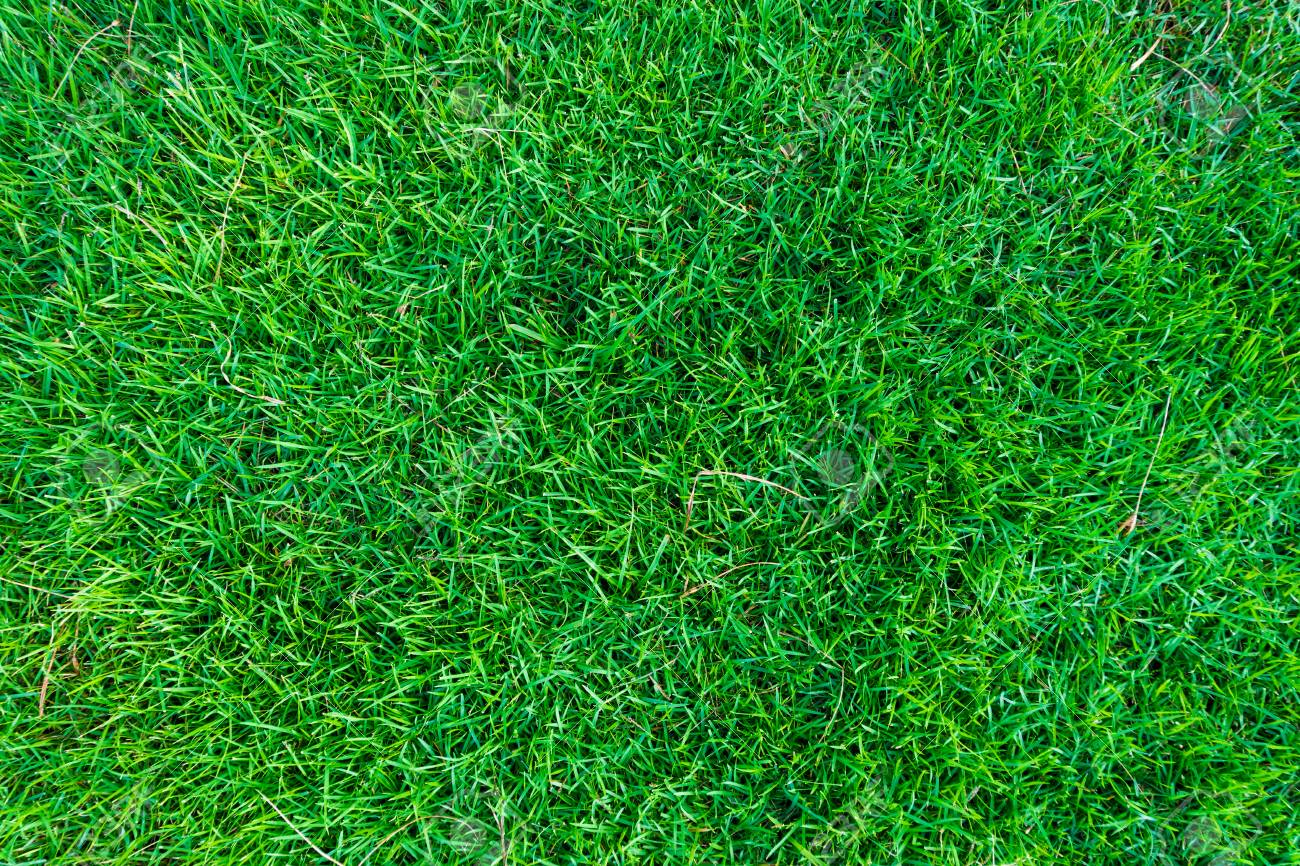 Background Of Green Grass Texture Natural Wallpaper Stock Photo Picture And Royalty Free Image Image 78824443