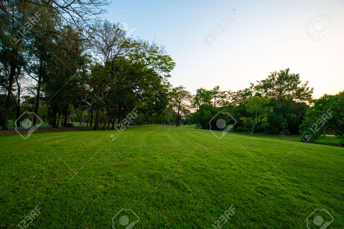Beautiful green field with tree in city park sunset landscape - 122217279