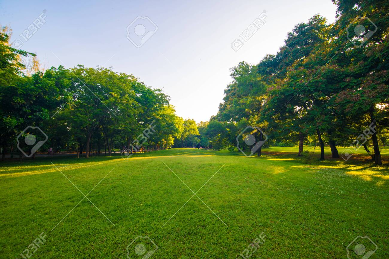 Sunset park green lawn with tree city public park - 140425521