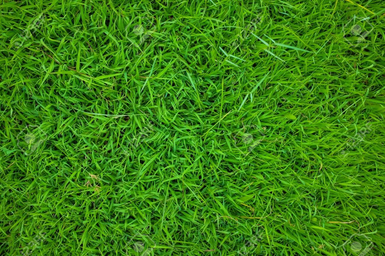 Green grass nature texture botanical garden, Fresh grass - 140984554