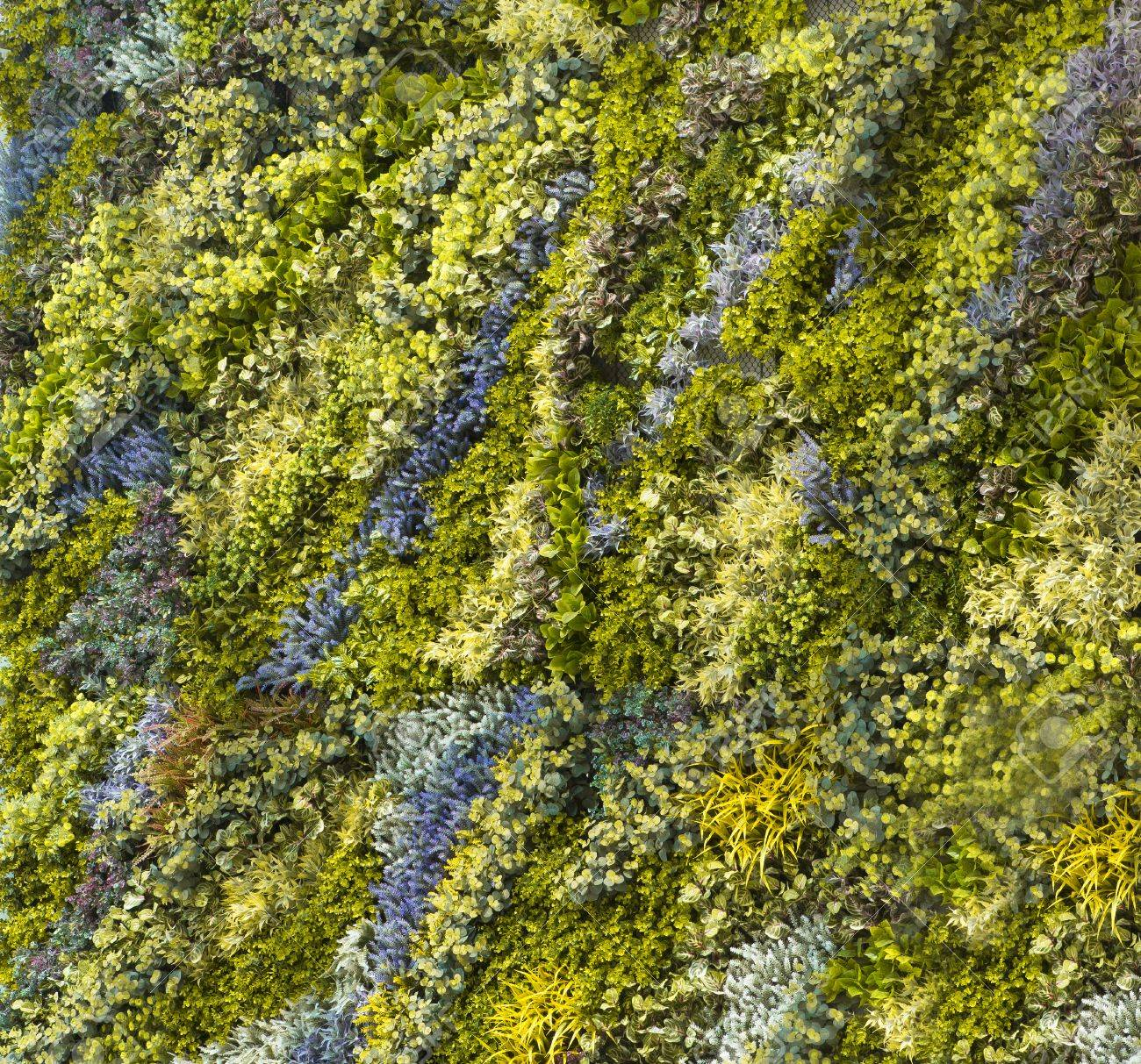 The Green Creeper Plant On A Wall Stock Photo, Picture And Royalty ...