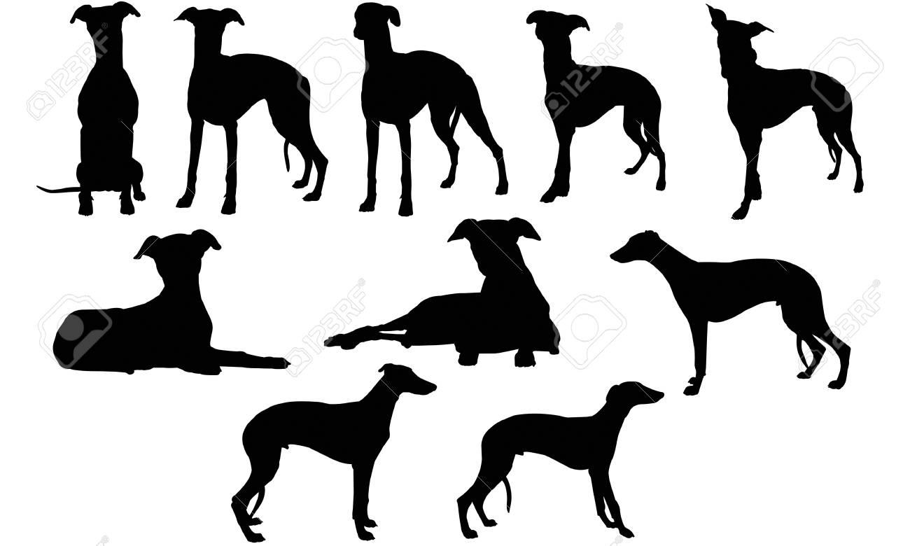 Whippet silhouette illustration - 92157254