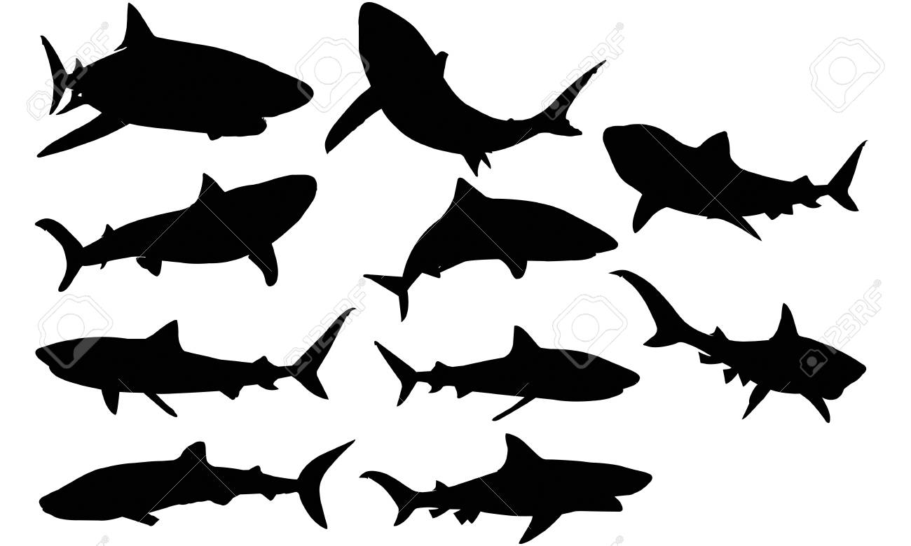 Tiger Shark Silhouette Illustration Royalty Free Cliparts Vectors And Stock Illustration Image 92157397 Almost files can be used for commercial. tiger shark silhouette illustration