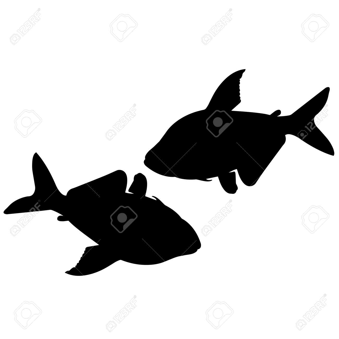 Guppy Silhouette Vector Graphics - 157908828