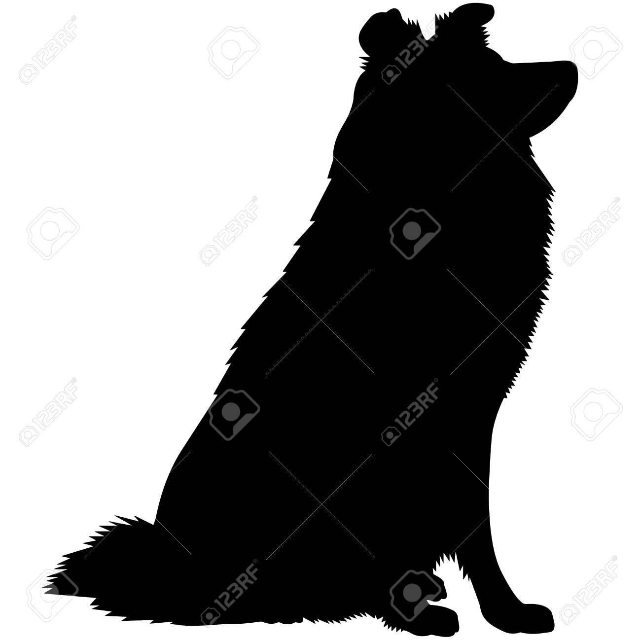 Shetland Sheepdog Dog Silhouette Vector Graphics - 157969672