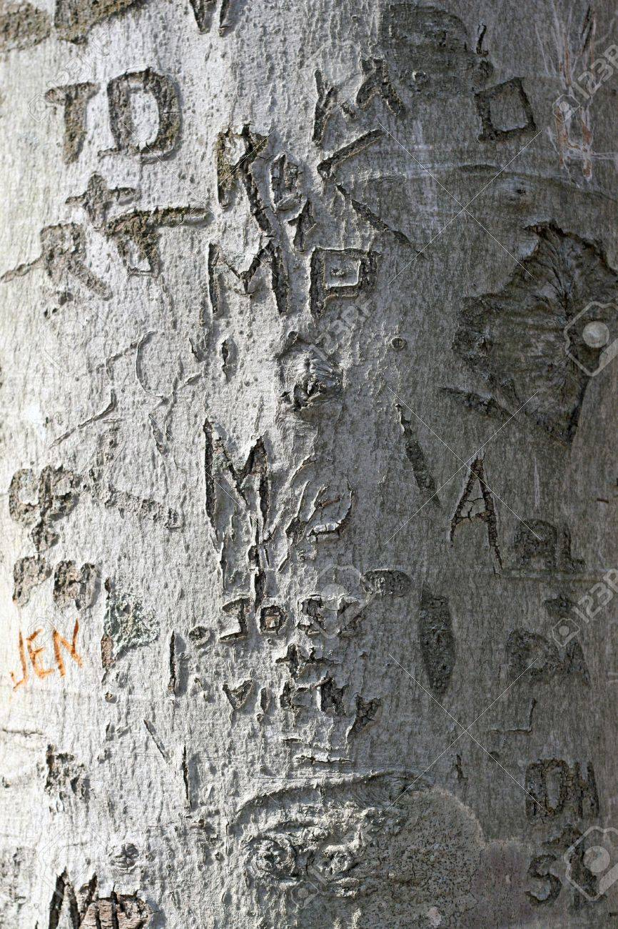 A Closeup Texture Of A Tree Trunk With A Whole Bunch Of Names