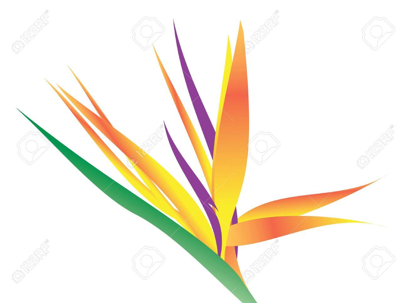 An illustration of a bird of paradise flower over white. Stock Illustration - 3879697