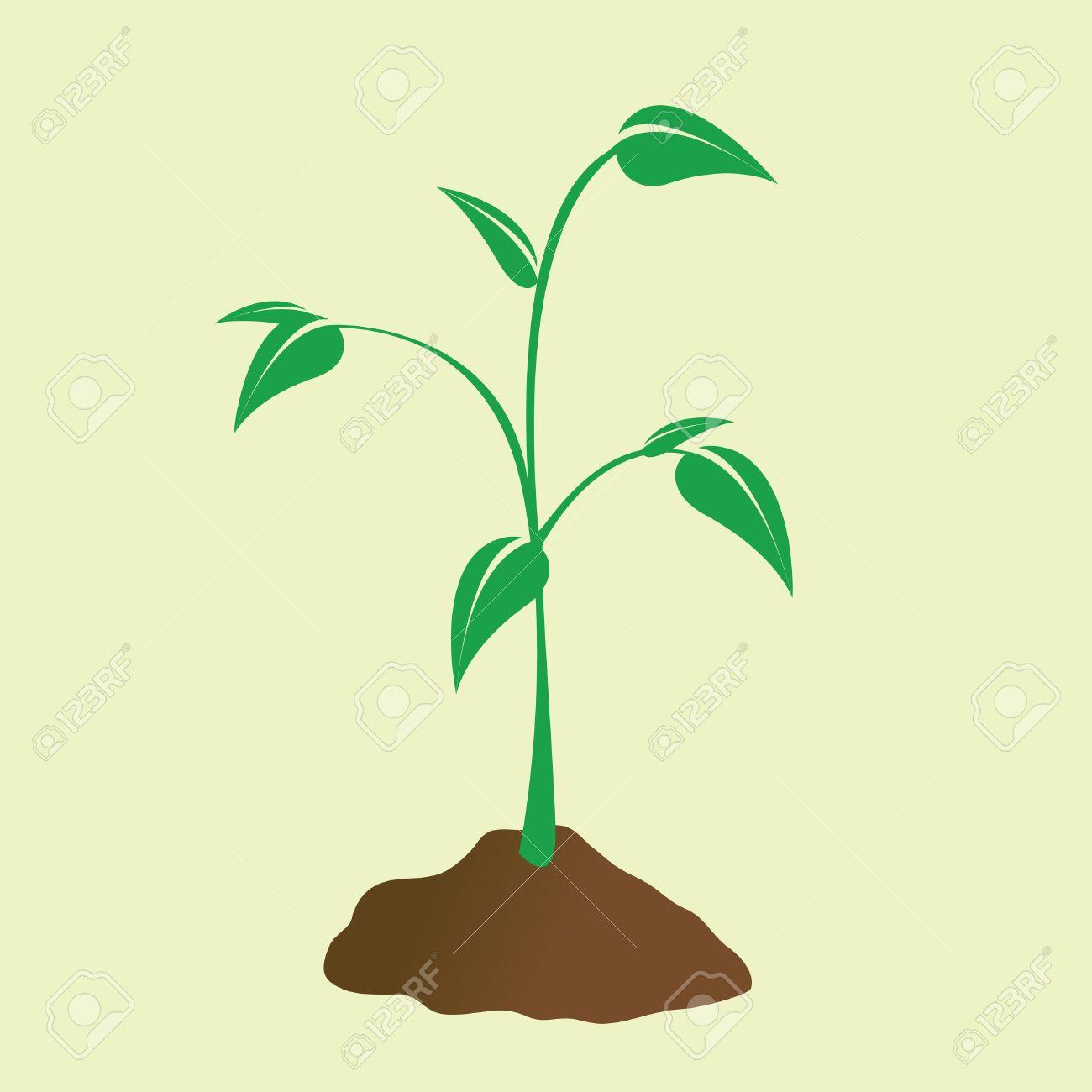 若い植物などの汚れから発芽しますのイラスト素材ベクタ Image