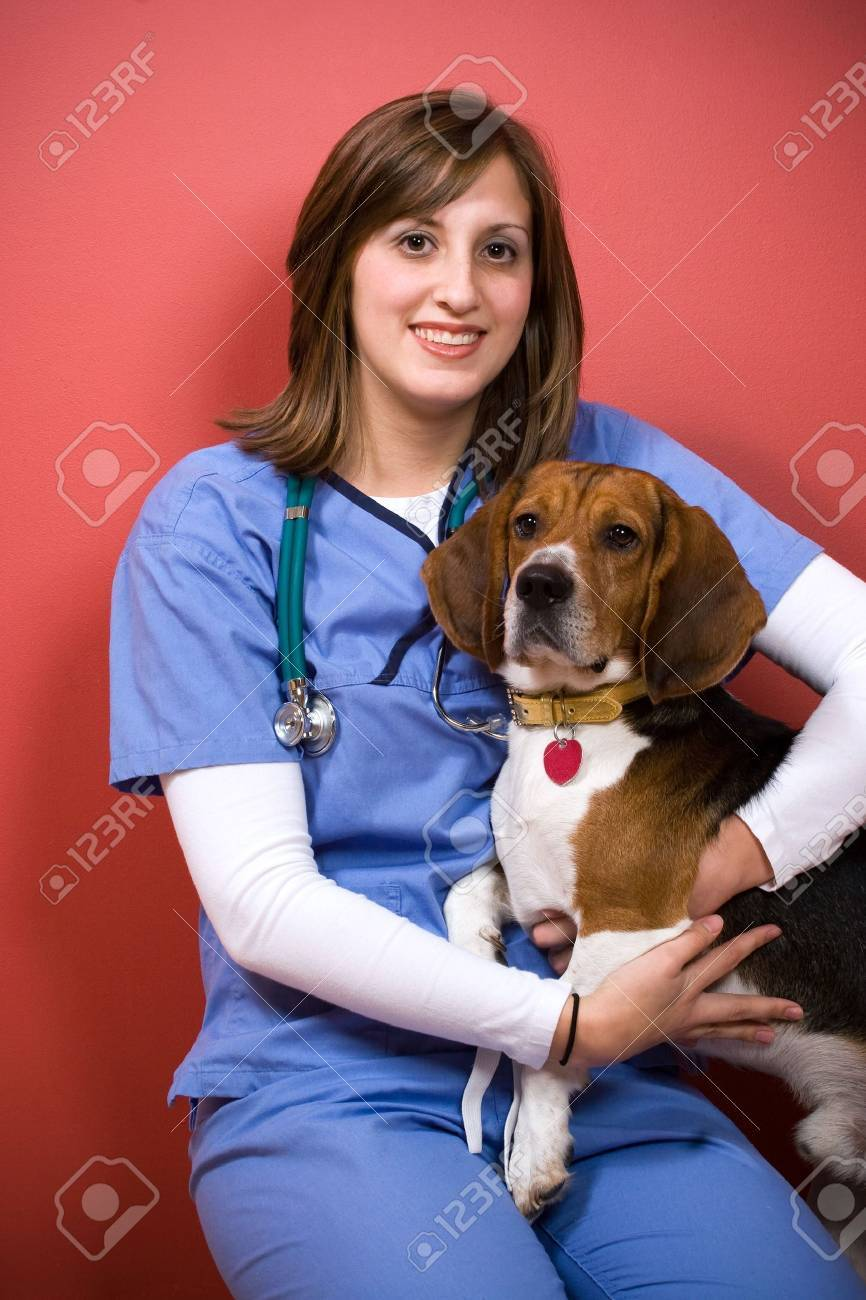A veterinarian posing with a purebred beagle dog. Stock Photo - 4854750