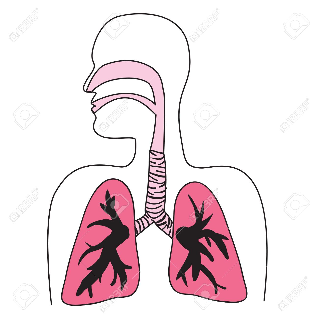 Drawing Of The Human Respiratory System Royalty Free Cliparts Vectors And Stock Illustration Image 7054546