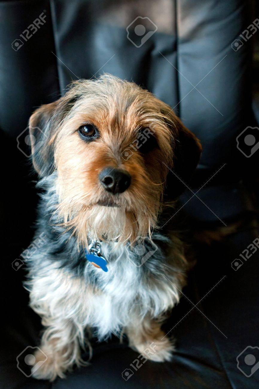 Pictures of terrier mix breeds
