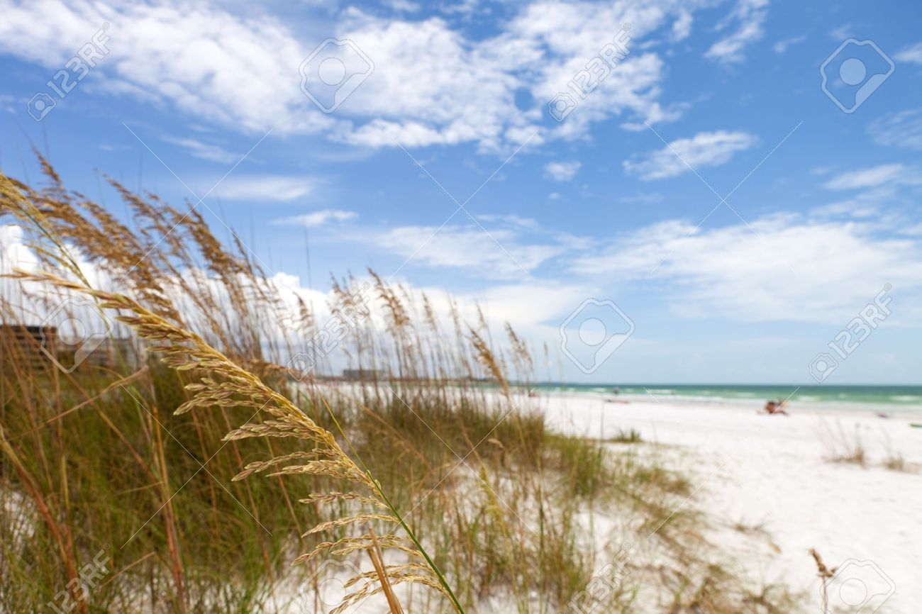 Siesta Key Beach is located on the gulf coast of Sarasota Florida with powdery sand. Recently rated the number 1 beach location in the United States. Shallow depth of field with focus on the grasses. Stock Photo - 16960099