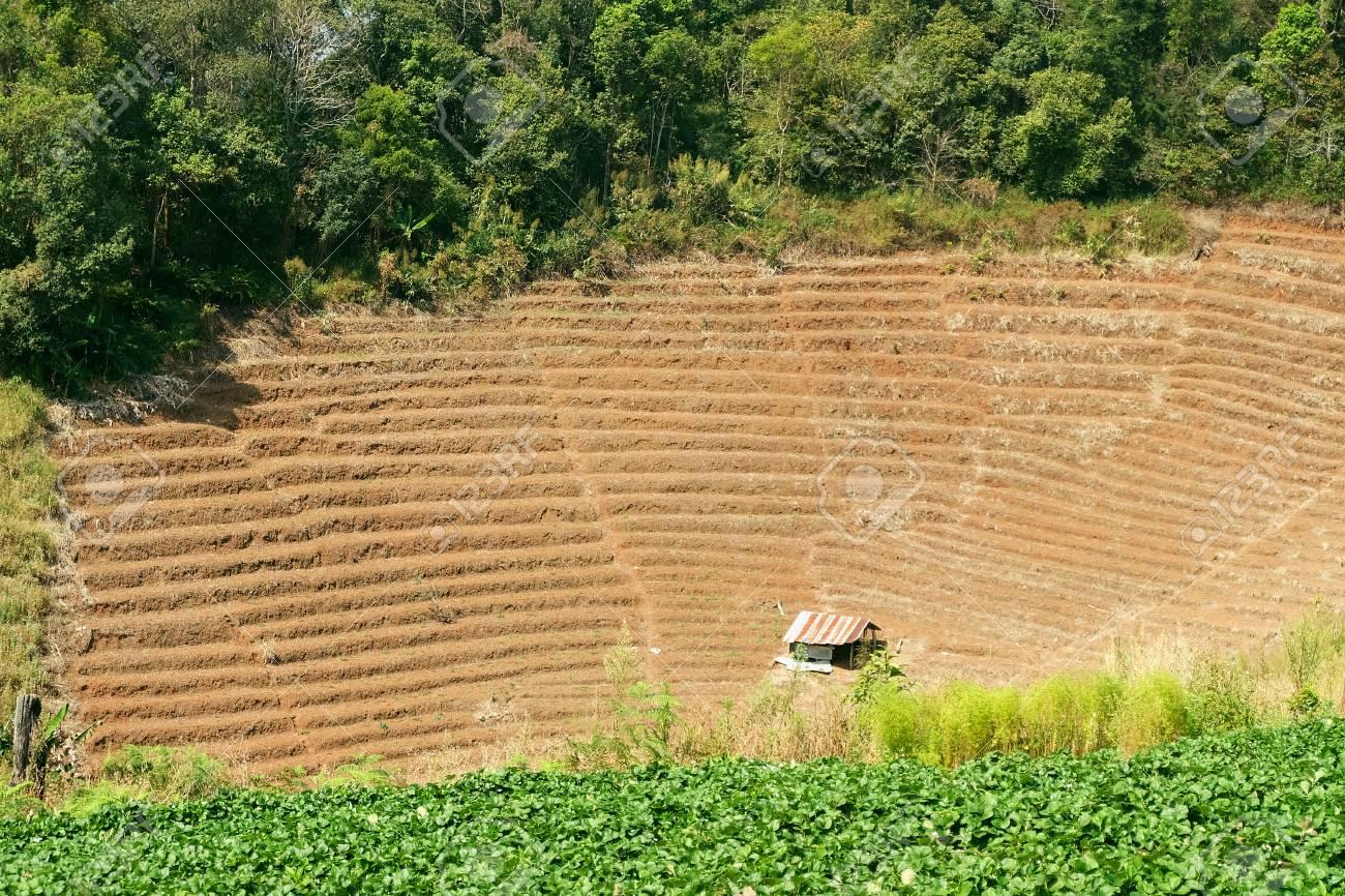 landwirt bauen hütte gegen das ackerland lizenzfreie fotos, bilder