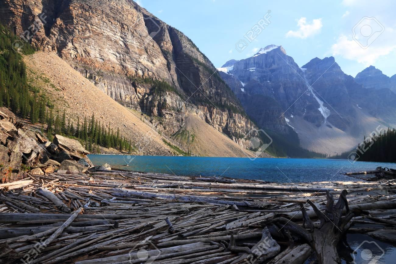 Dead Wood In Moraine Lake Alberta Canada