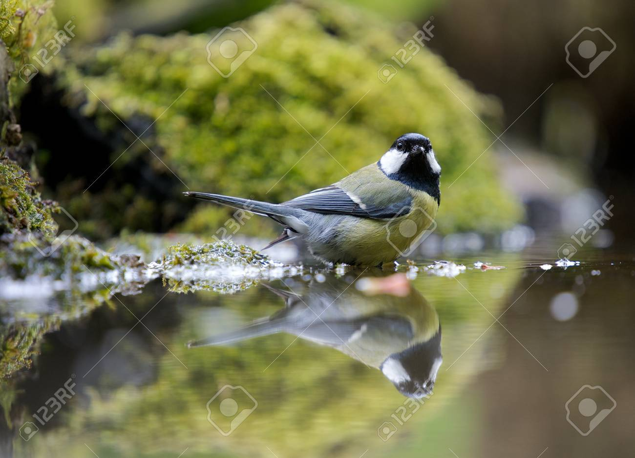 A photo of a songbird Stock Photo - 17007327