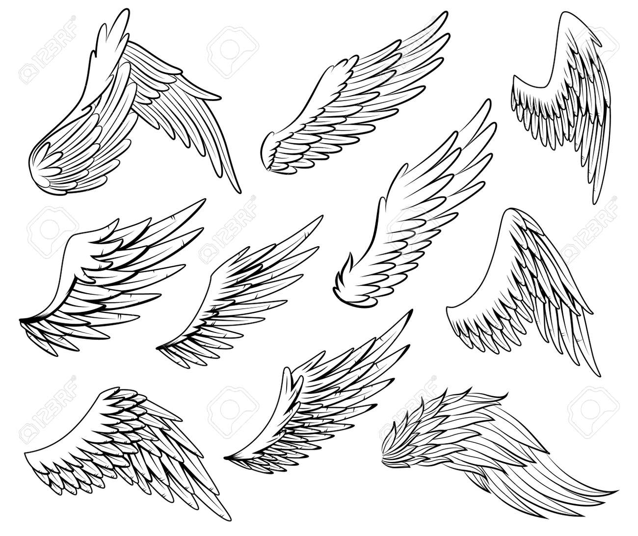 Collection of vintage heraldic wings sketch. Monochrome stylized birds wings. Hand drawn contoured stiker wing in open position. Design elements in coloring style - 167532458