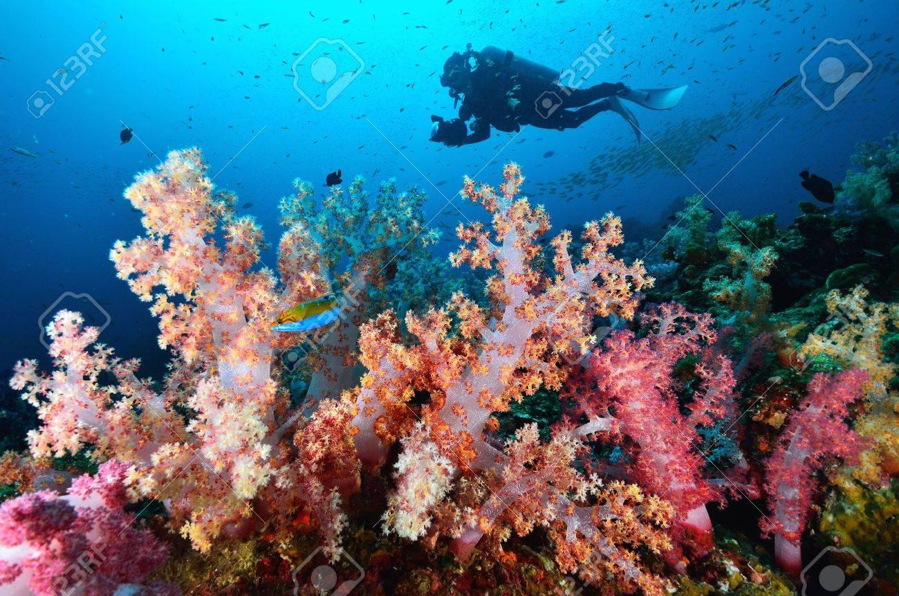 Soft coral colony , Similan island Thailand - 20446077