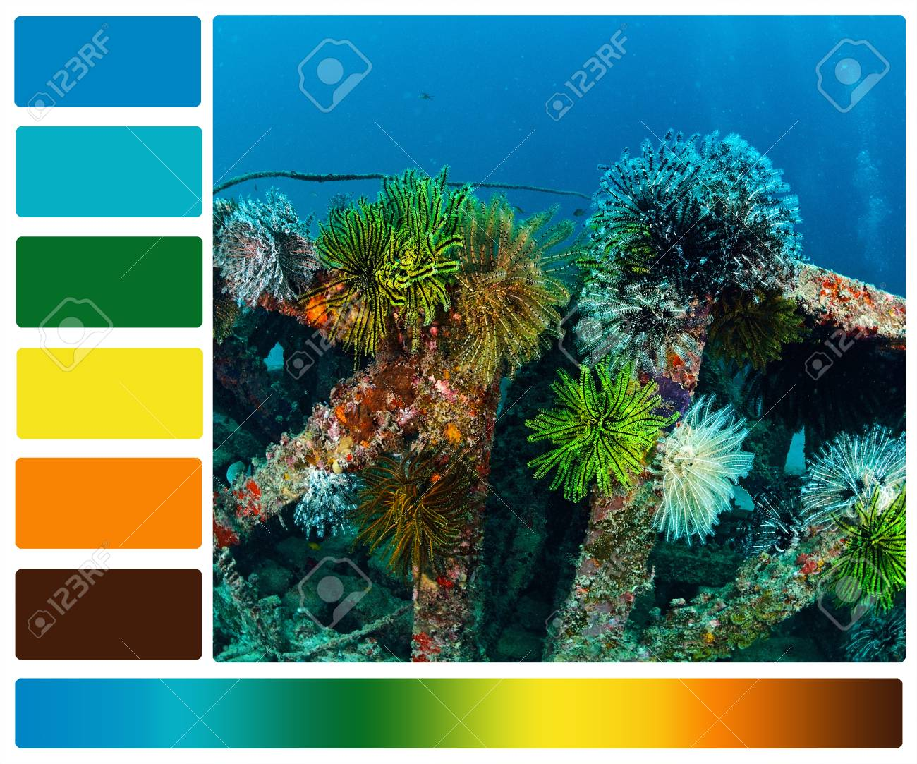 Marine Life Underwater With Color Palette Swatches Stock Photo