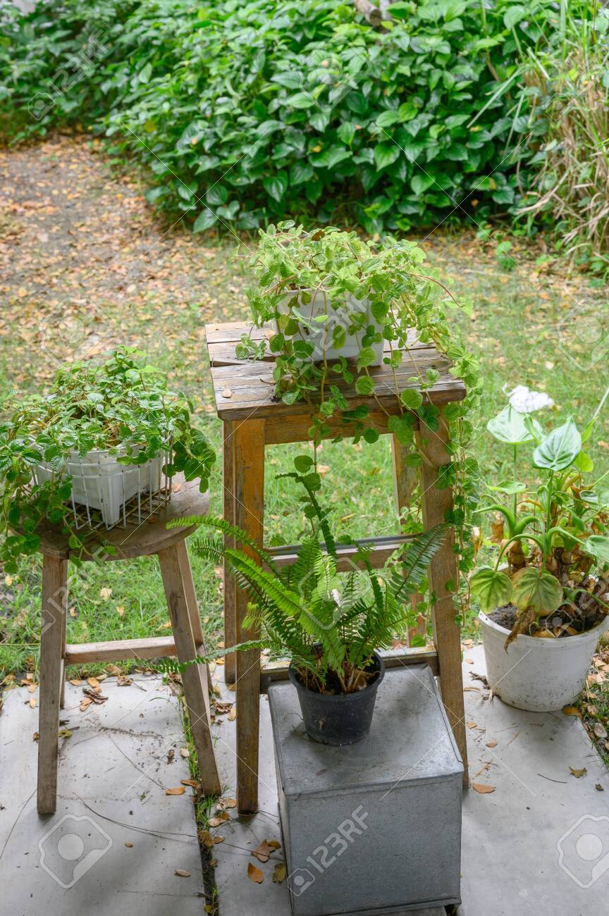 Cool Tiny Plant In Small Pot On Wood Stool Squirreltailoven Fun Painted Chair Ideas Images Squirreltailovenorg