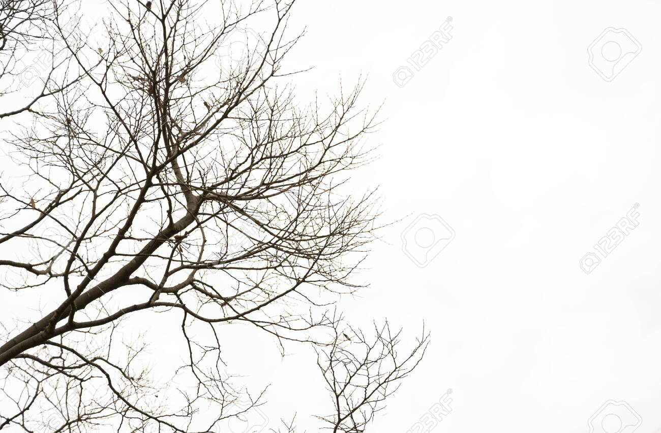 Natural twigs on a white background - 143163968
