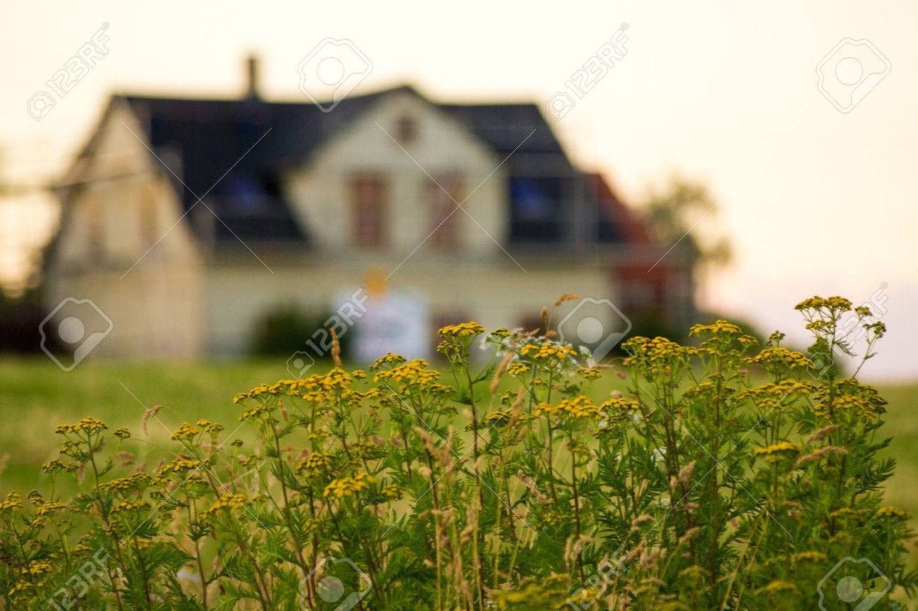 Blurred House With Focused Flowers Concept Rent Sell Or Buy
