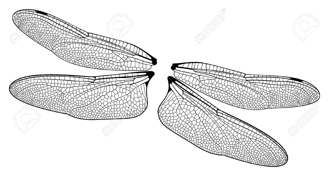 dragonfly wings royalty free cliparts vectors and stock
