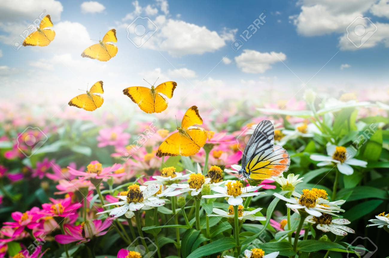 Butterfly On Colorful Beautiful Flowers With Flying In The Sky Stock Photo