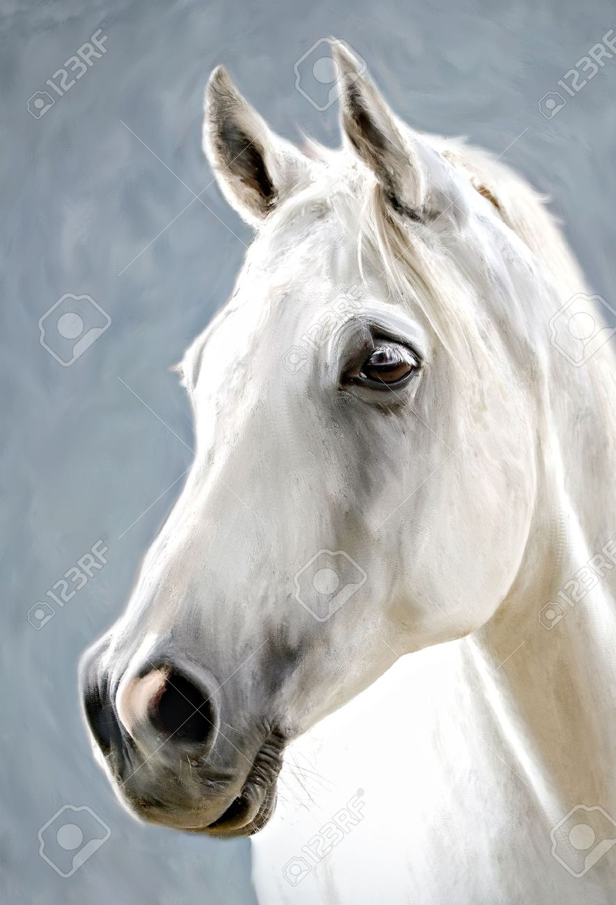 A Photograph Stylized As Painting Portrait Of A White Horse Stock Photo Picture And Royalty Free Image Image 17461625