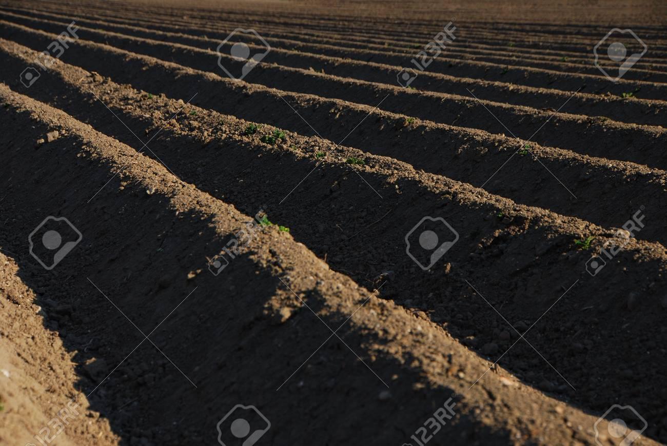 well plowed farmland with dark brown earth Stock Photo - 14871120