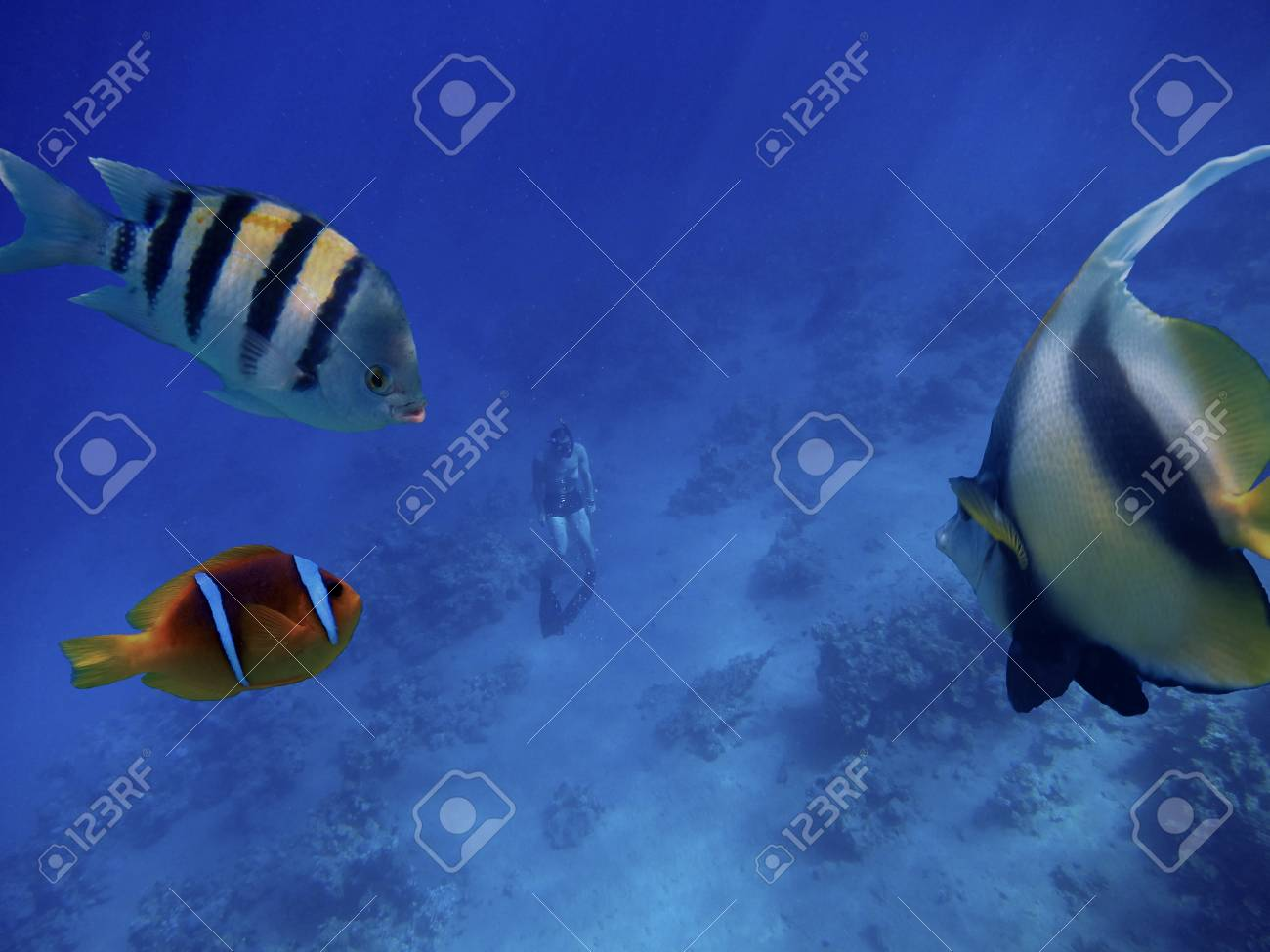 free diving or apnea diving emerged from the depths of the ocean