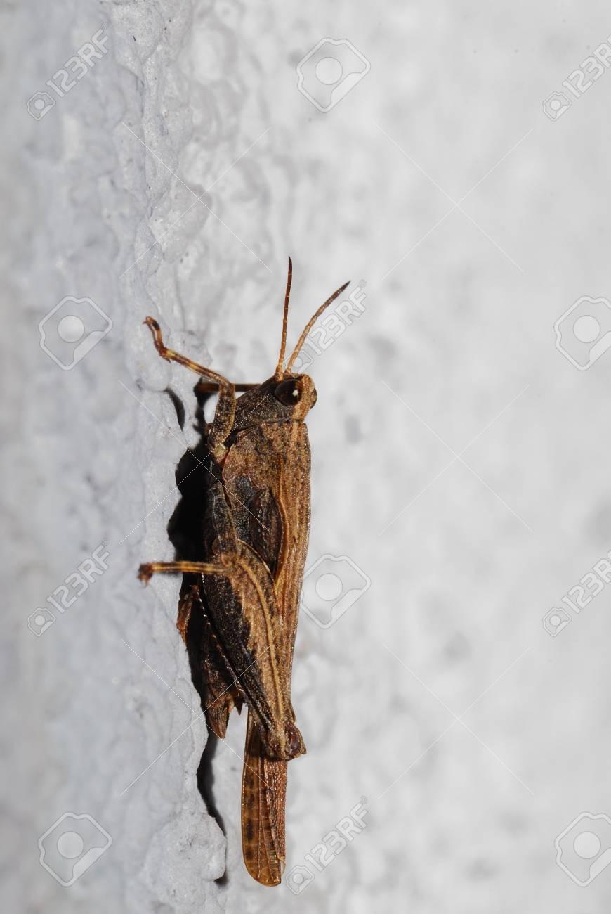Kleine braune käfer an der wand
