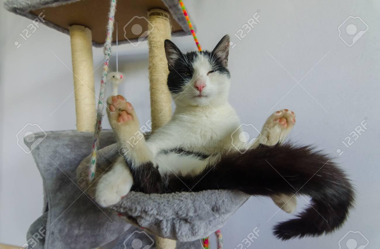 Cat Sits And Has Legs Apart Lizenzfreie Fotos Bilder Und Stock