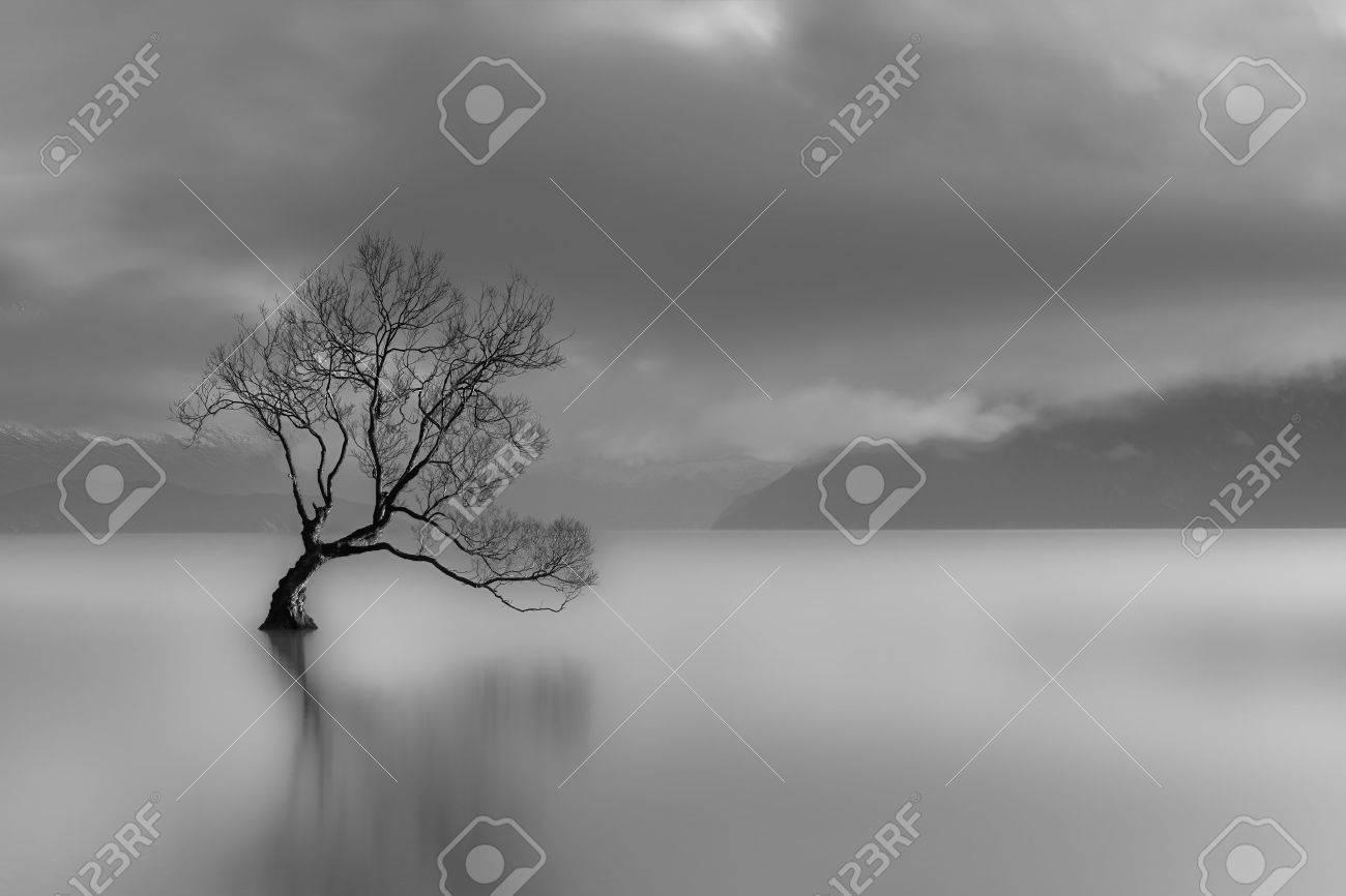 Lone Tree, Lake Wanaka, New Zealand black and white - 50927454