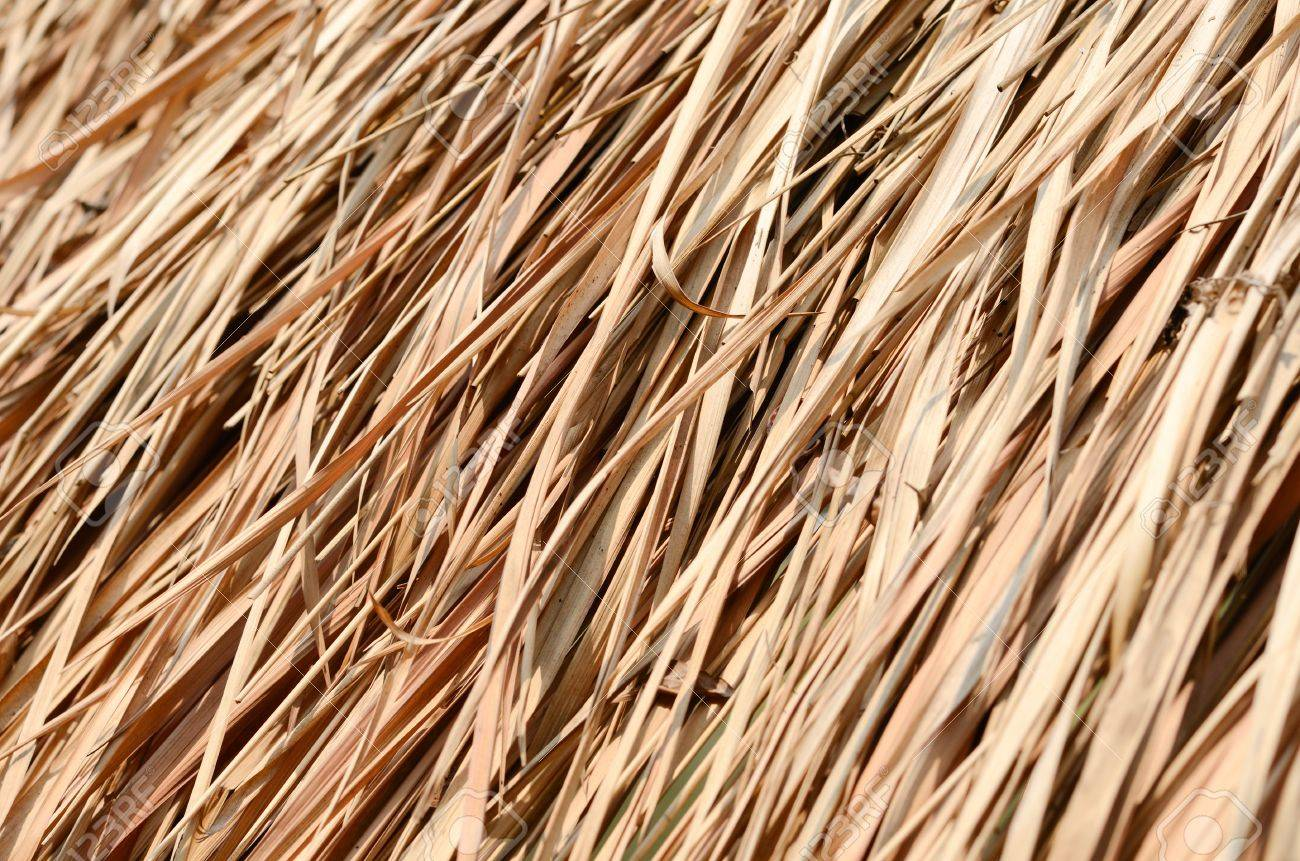 Closeup texture of thatch roof for background Stock Photo - 12926744