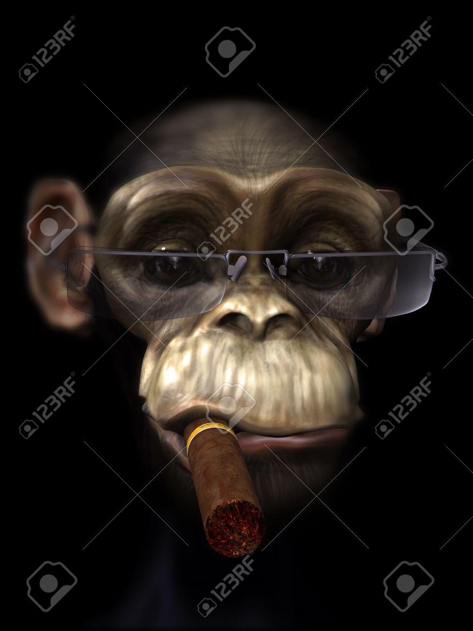 mr chimp the pimp Stock Photo - 10480790