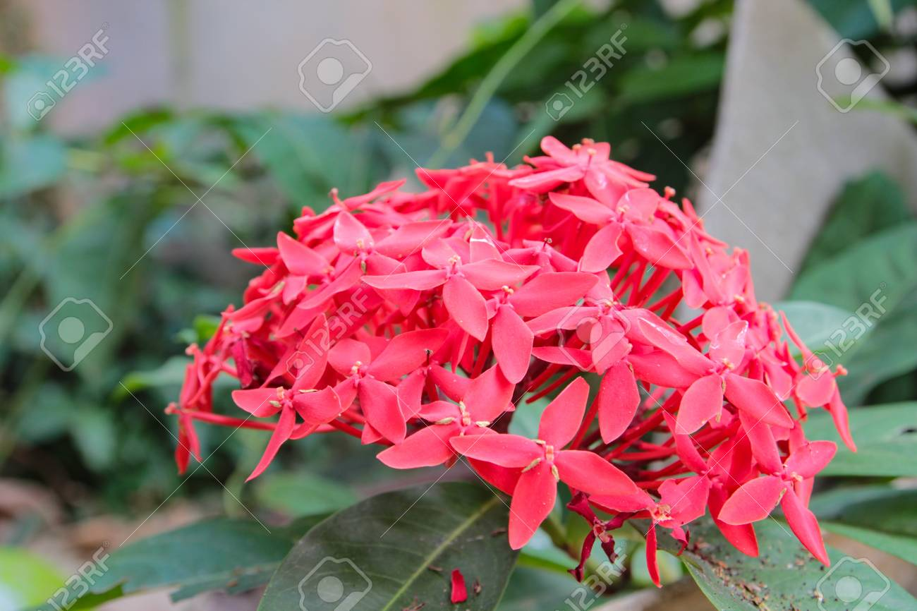 Spike Flower Stock Photo Picture And Royalty Free Image Image