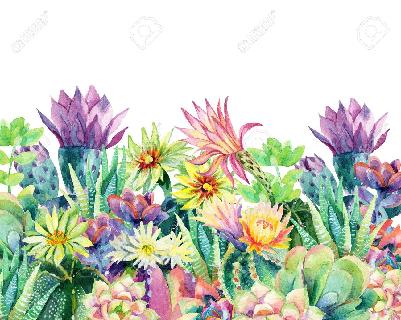 Watercolor Blooming Cactus Background Exotic Cacti With Flowers Stock Photo Picture And Royalty Free Image Image 78069058