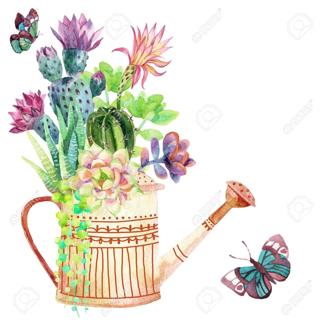 水彩の多肉植物じょうろや蝶手描きのイラスト の写真素材画像素材