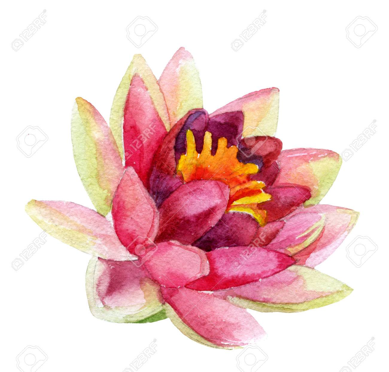 Hand Painted Lotus Flower Watercolor Illustration Stock Photo