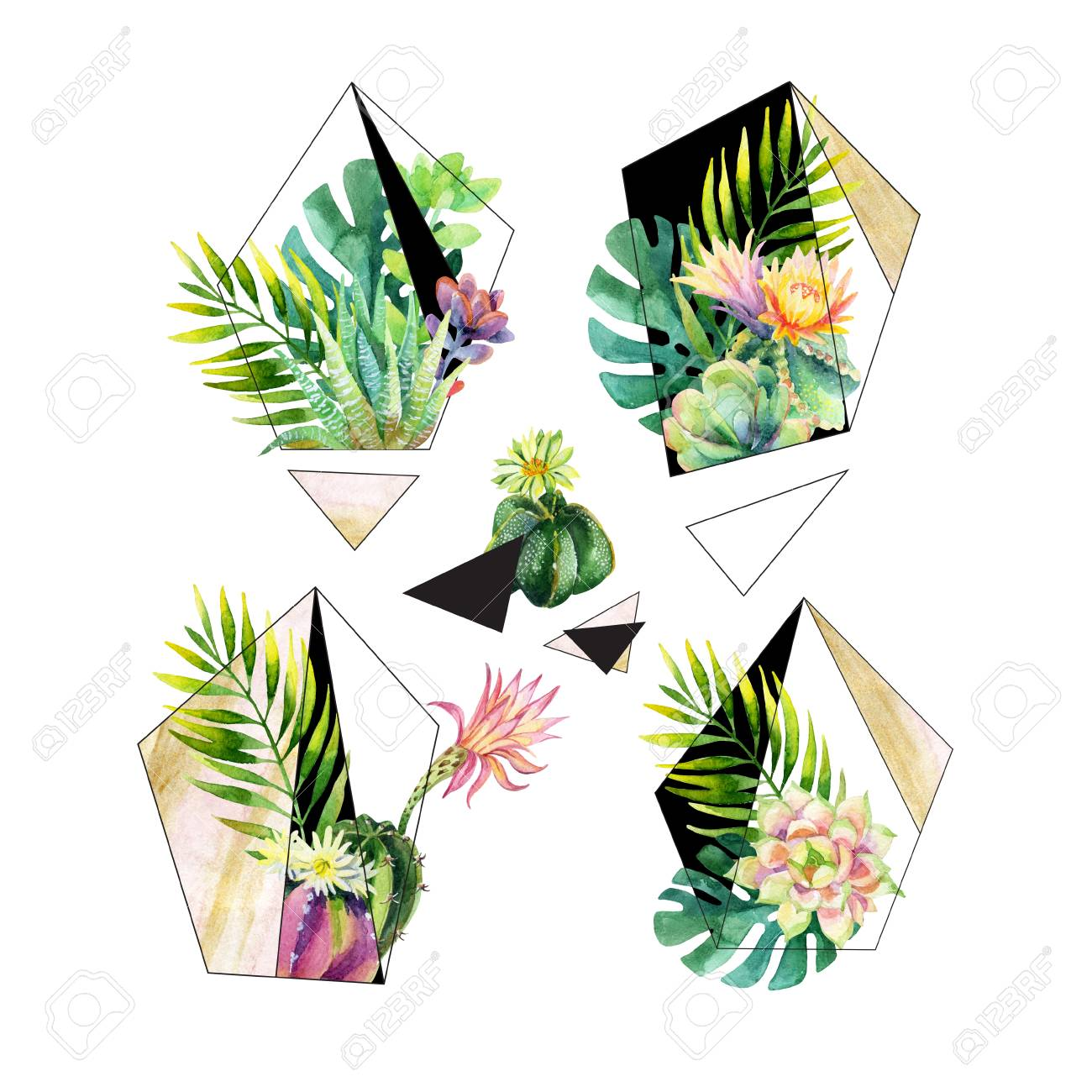 Watercolor Exotic Abstract Terrarium Plants Isolated On White